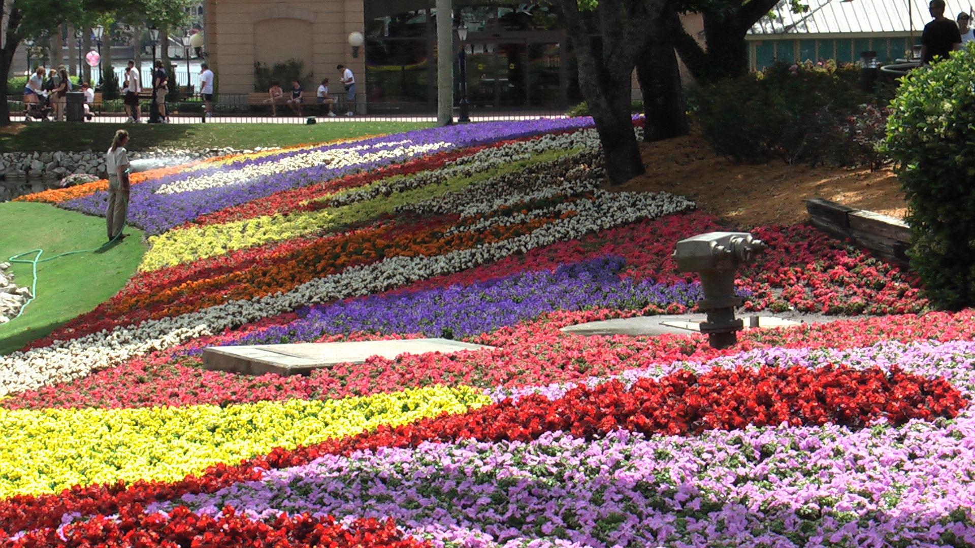 Flower garden festival the epcot for Beautiful gardens landscaping