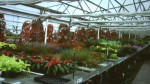 greenhouse scene from the Making of EPCOT Flower & Garden Festival movie